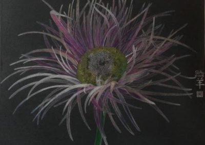 Sally Arnold - Study of Gerbera Daisy - 600x600 - Coloured Pencil on Canvas - R6825