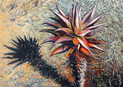 Peter Midlane - Icon #1 Aloe _ Shadow- 600x600 Oil on Canvas R8665